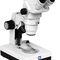 stereomicroscopio / con zoom