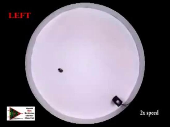 Direzione acustica del triotto Biobots