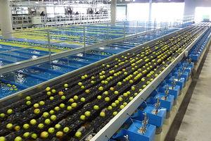 macchina di smistamento automatica / per frutta / per verdura / per l'industria agroalimentare